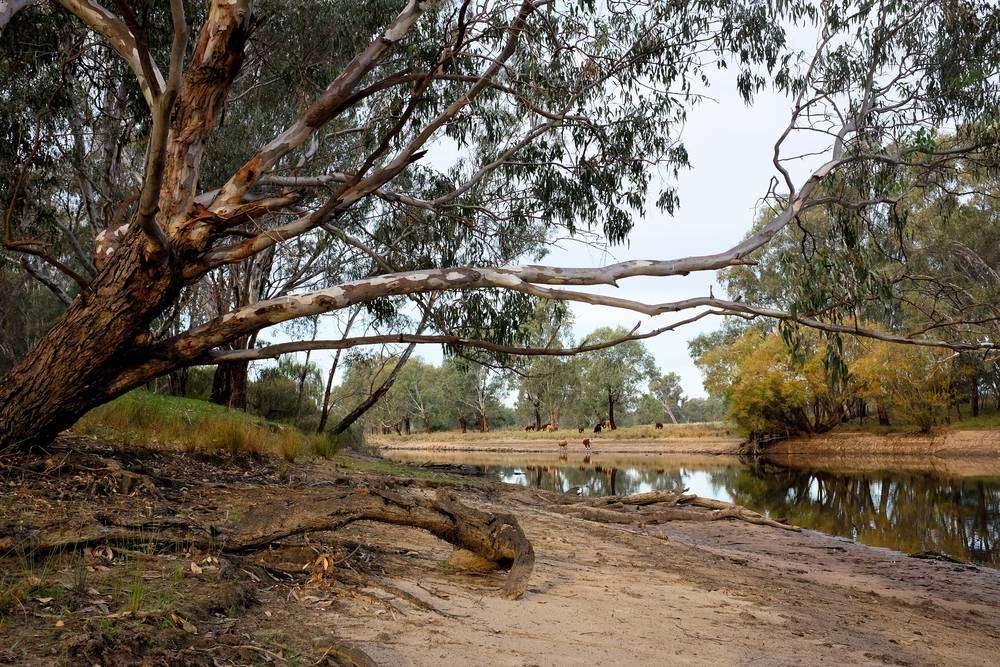 Our favourite spots: Barmah National Park, VIC